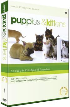 Timm Hogerzeil - PUPPIES AND KITTENS - KISKUTYÁK ÉS KISCICÁK