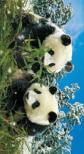 - 3D Könyvjelzők - Panda